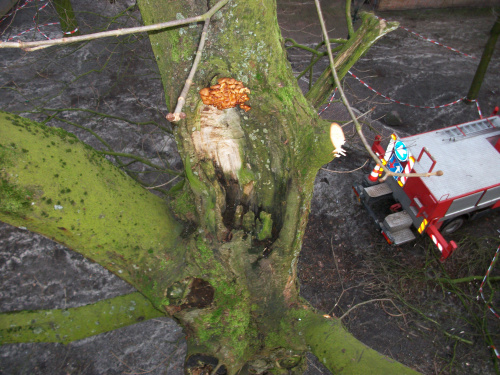 Nieuwe bomen Henricus Muntinglaan