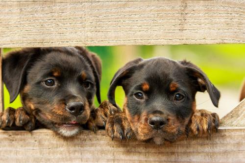 Hondenbelasting in Haren en Ten Boer