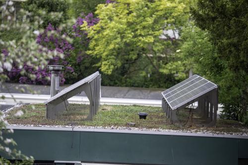 Subsidie voor groene daken voor dit jaar op