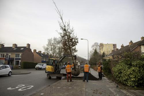 'Kratjes' geven bomen ondergronds ruimte