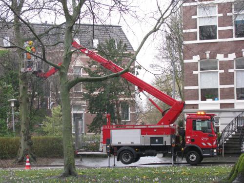 Gemeentelijke bomenkaart uitgebreid met snoeikaart 2021