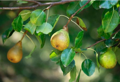 Gratis perenbomen bij Tuin in de Stad