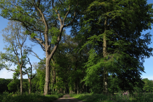 Landschapsbeheer Groningen knapt drie landgoederen op